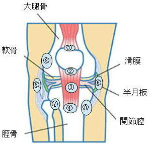 a3789dce2f また、靭帯が骨のすぐ上を通るところでは、膝の曲げ伸ばしによって靭帯と骨の摩擦が生じて炎症の原因になります。